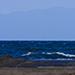 江の島を囲む海には海鳥たちも多く集う